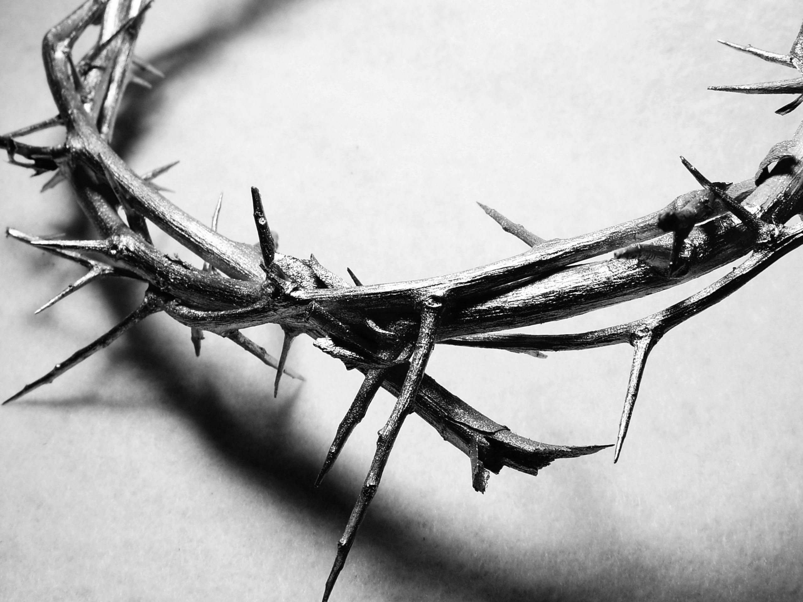 Image result for crown of thorns